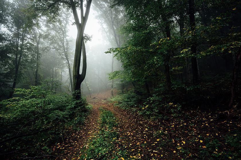 Неизвестный путь