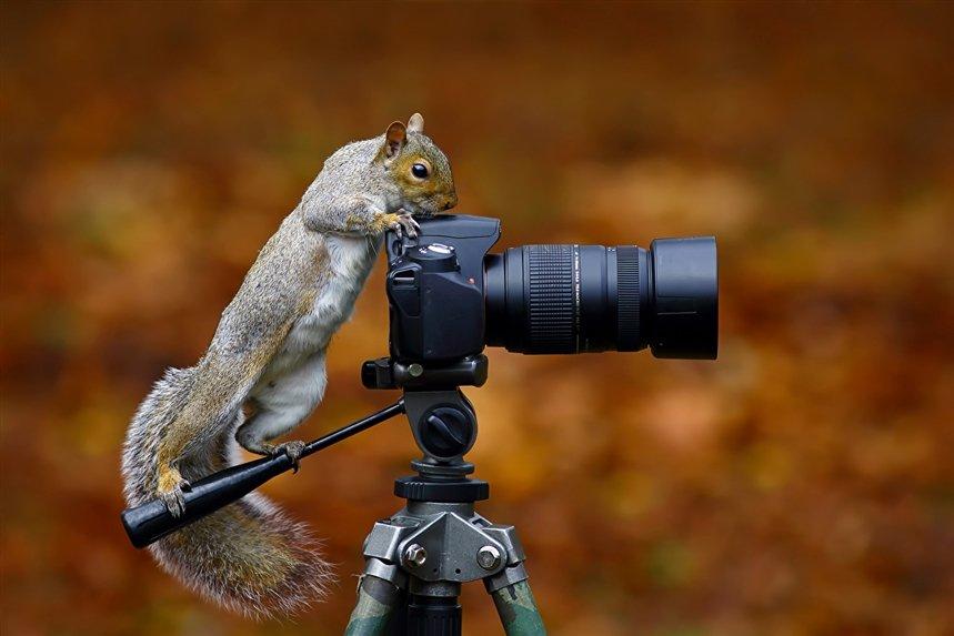 О чем жалеют фотографы
