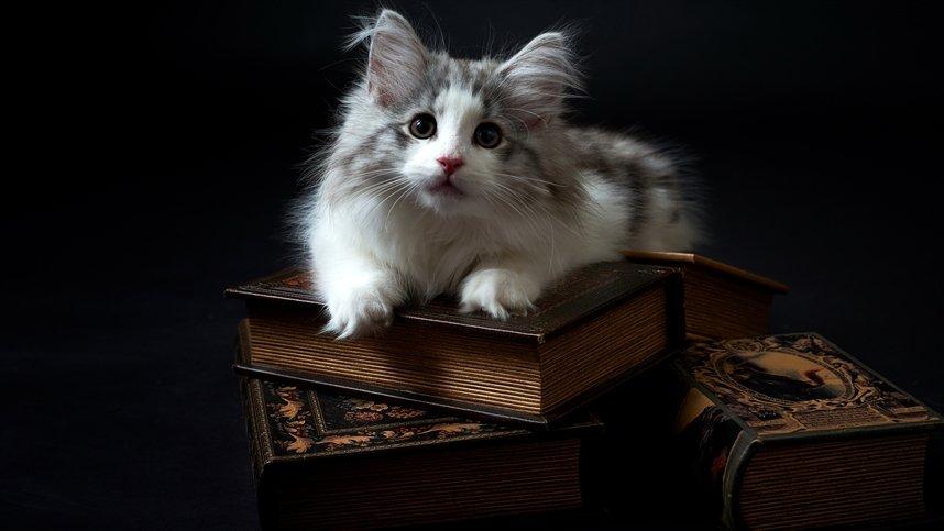 Книги о кошках