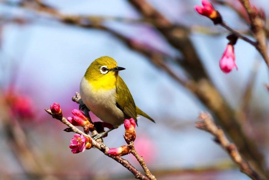 Международжный день птиц
