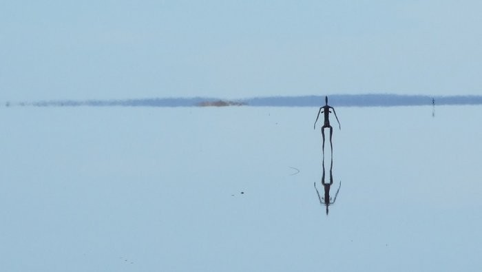 Скульптуры на озере Баллард, Западная Австралия