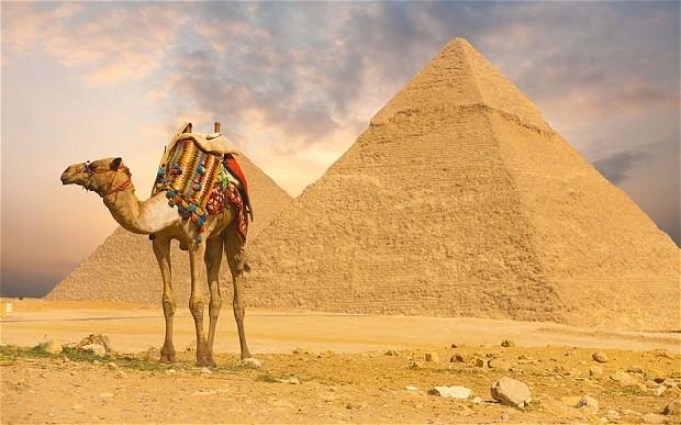 Египет, верблюд, пирамида