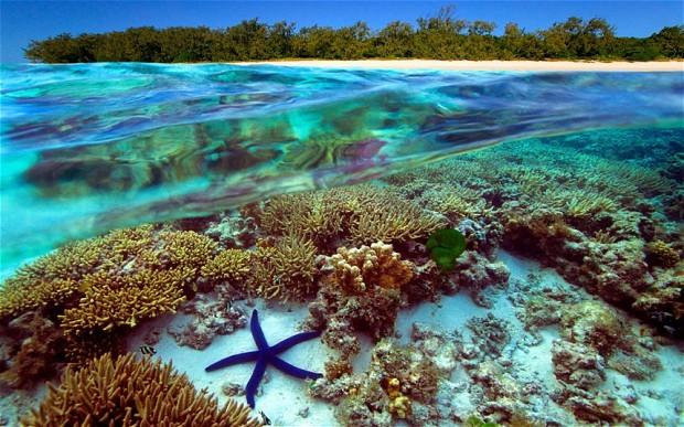 Большой Барьерный риф, Австралия, кораллы