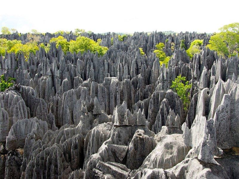 Каменный лес в Мадагаскаре