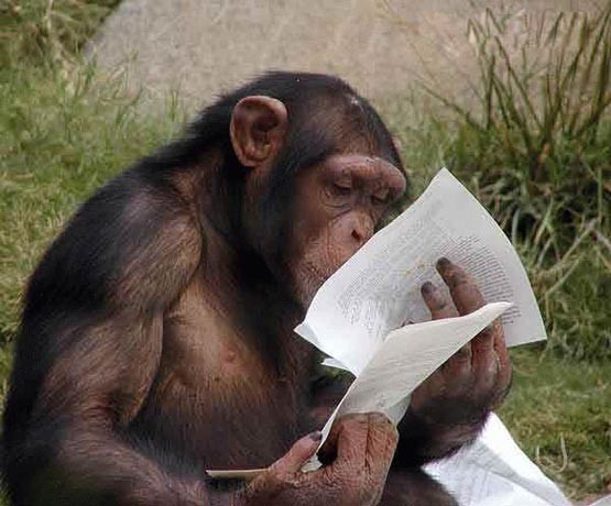 умные приматы